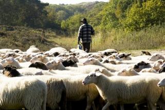 Expositie Grote Kerk Alkmaar 2012 - Herder met zijn schapen - Petra de Groot