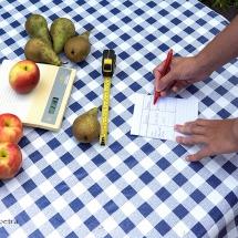 Appels met peren vergelijken © fotografiepetra