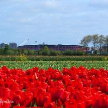 Bollenveld AZ Stadion © fotografiepetra