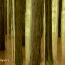 Bomen 1 © fotografiepetra