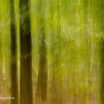 Bomen 2 © fotografiepetra