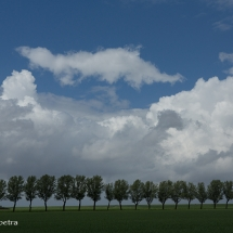 Bomenrij Friesland © fotografiepetra