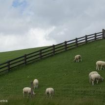 Dijk in Friesland © fotografiepetra