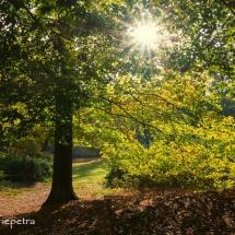 Licht door de bomen 1 © fotografiepetra