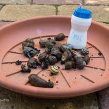 Op alle slakken zout leggen © fotografiepetra
