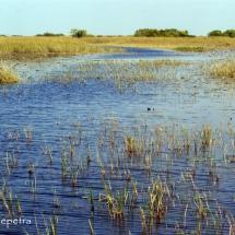 River of grass 1 © fotografiepetra