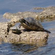 Schildpadden 1 © fotografiepetra