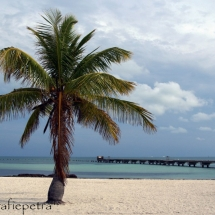 Palm op Key West © fotografiepetra