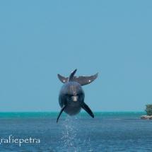 Dolfijn © fotografiepetra