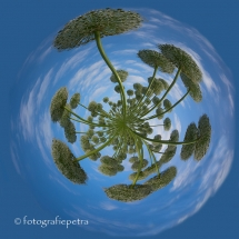 Little Planet witte uienbollen © fotografiepetra