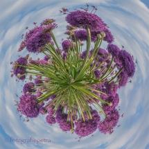 Little Planet Paarse Uienbollen © fotografiepetra