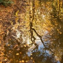 Spiegeling Berger bos © fotografiepetra