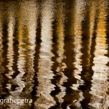 Spiegeling bomen © fotografiepetra