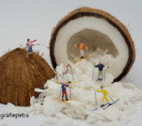 Expositie 2018 Miniatuur Kokosnoot © Fotografiepetra