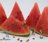 Expositie 2018 Miniatuur Meloen © Fotografiepetra