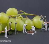 Onderzoek Naar Krent Tussen De Druiven © Fotografiepetra