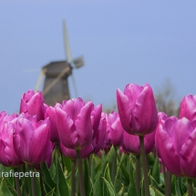 Molen 't Zand © fotografiepetra