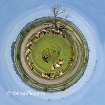 Little planet Oostvaardersplassen© fotografiepetra
