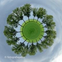 Bomen 1© fotografiepetra