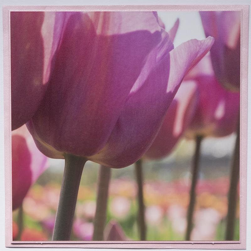 Kaart 22 Tulp Roze © fotografiepetra