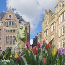 Tulpen Rokin © FotografiePetra