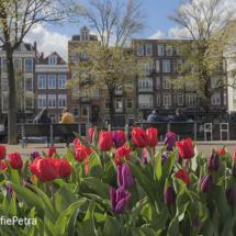 Tulpen in Amsterdam © FotografiePetra