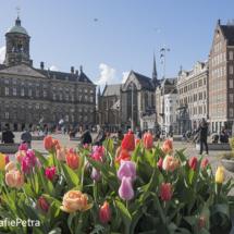 Tulpen op de dam © FotografiePetra